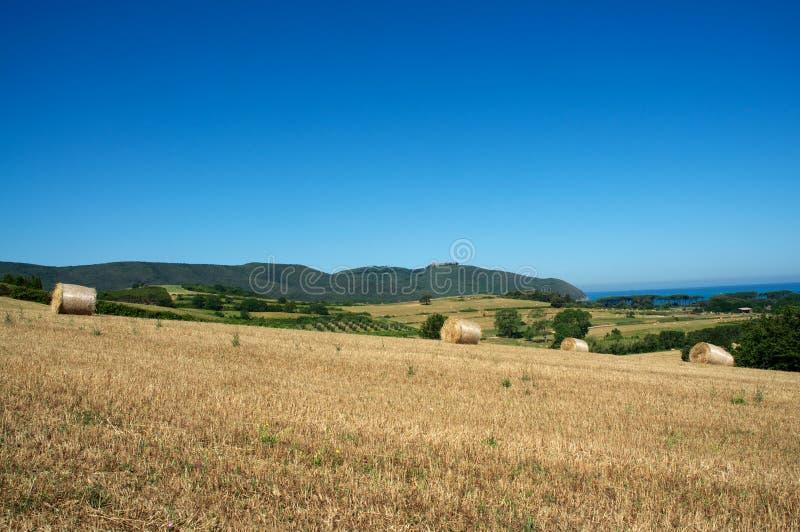 Weizen und Meer stockbilder