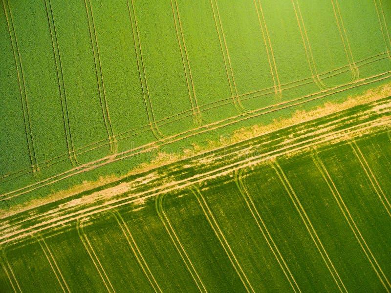 Weizen- und Rapssamenfelder mit Traktorbahnen stockfoto