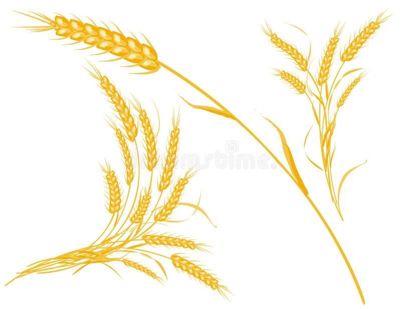 Weizen, vektorbaumuster mit Datei des Vektor ENV stockfotos