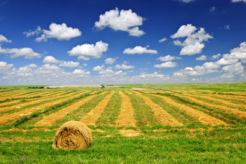 Weizenbauernhoffeld an der Ernte stockbilder