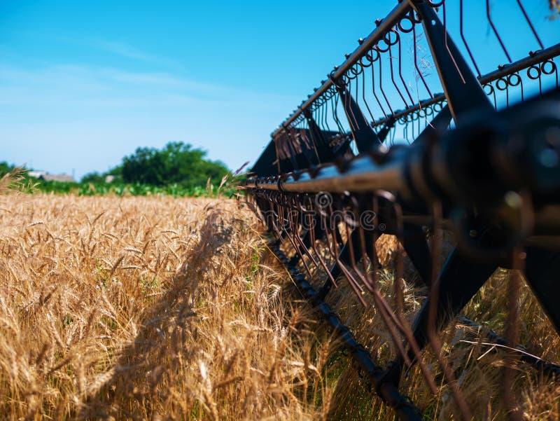 Weizenernte im Sommer Rote Ernteerträge vor Ort Erntezeit für landwirtschaftliche Maschinen mit Goldener Reifenernte stockbilder