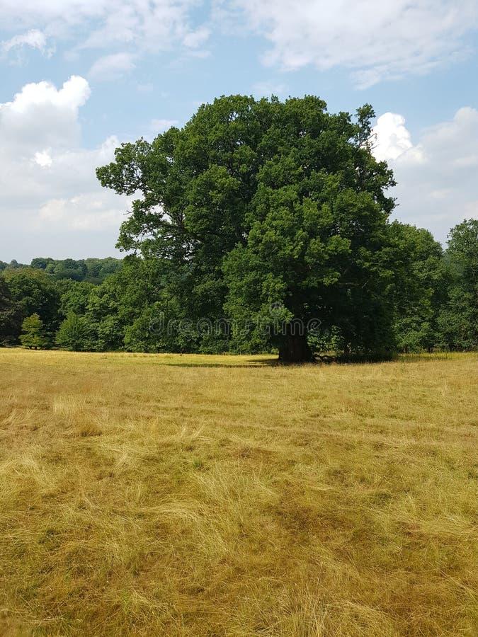 Weizenerntefeld in Süd-England lizenzfreie stockfotografie