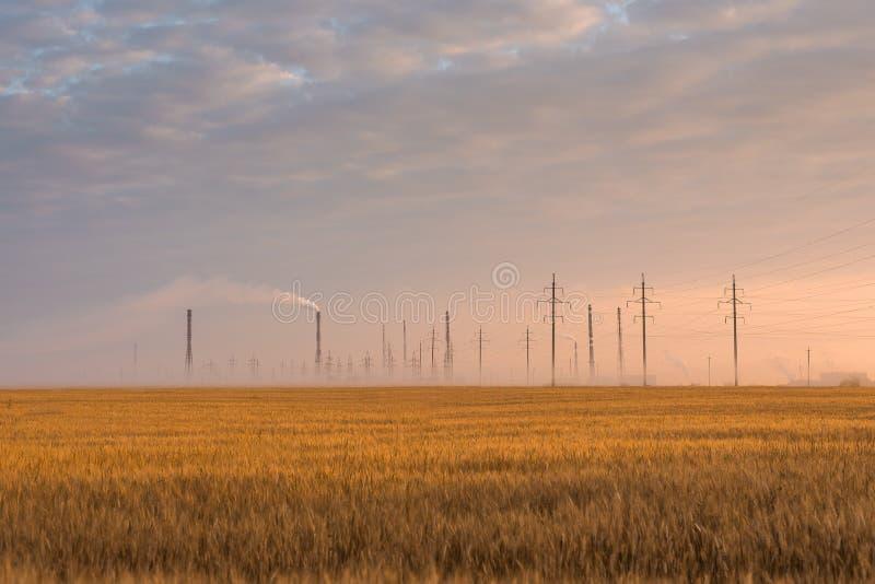 Weizenfeld auf dem Hintergrund der Industriestadt in den Strahlen des aufgehende Sonne lizenzfreie stockfotos