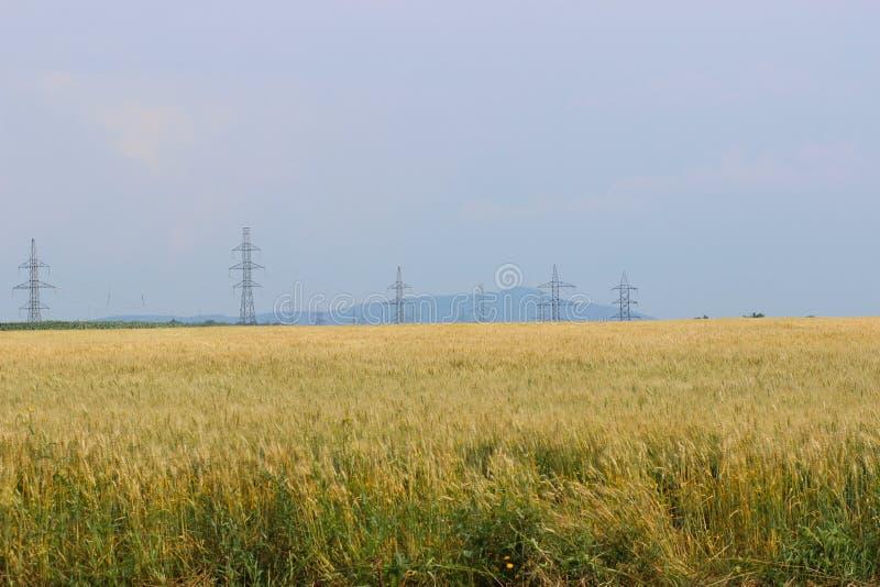 Weizenfeld mit Masten lizenzfreie stockfotografie