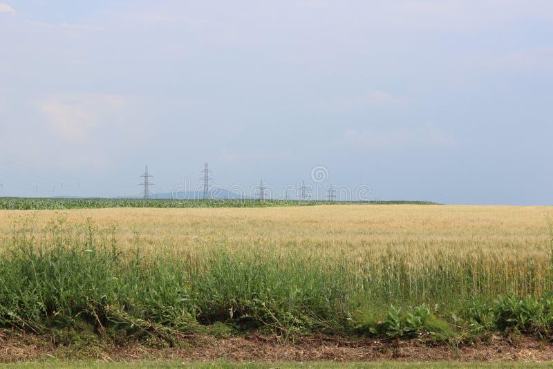 Weizenfeld mit Masten lizenzfreies stockbild