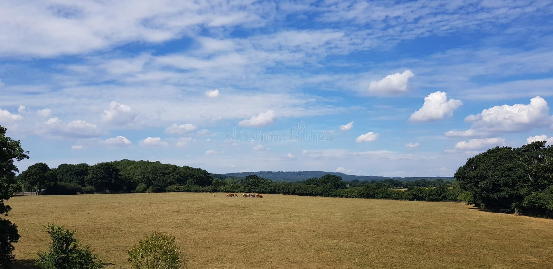 Weizenfeld in Süd-England stockfotografie