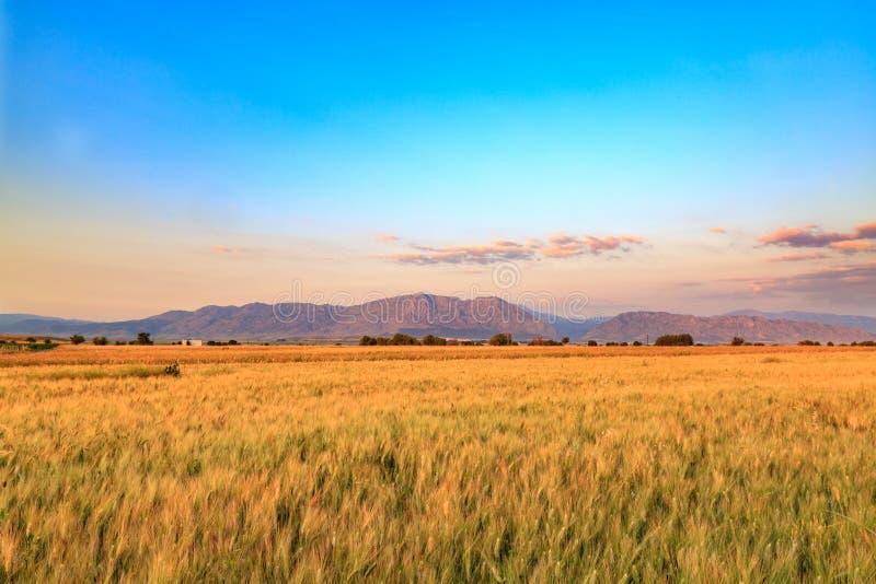 Weizenfelder mit Bergen in Denizli, die Türkei stockfotos