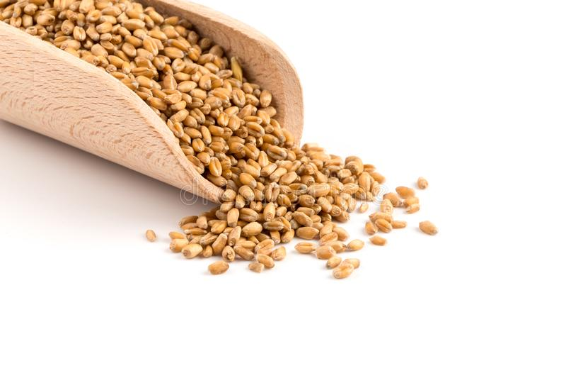 Weizenkorn in der Schaufel stockfotografie