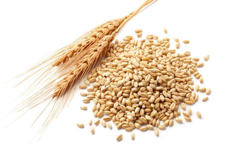 Weizenohren mit Weizenkernen stockfotografie