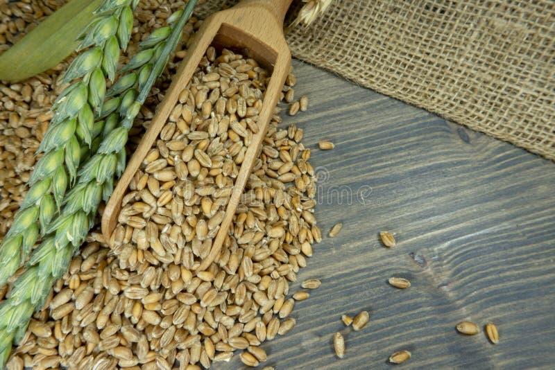 Weizensamen, die hölzerne Schaufel auf Jutefaser überlaufen lizenzfreies stockbild
