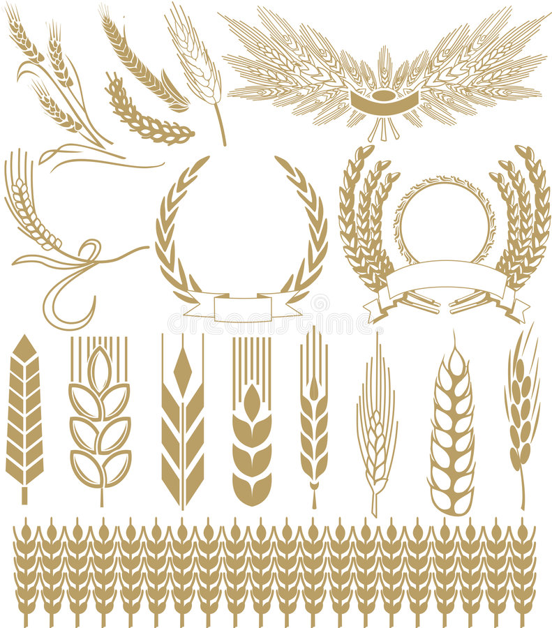 Weizenvektor lizenzfreie abbildung