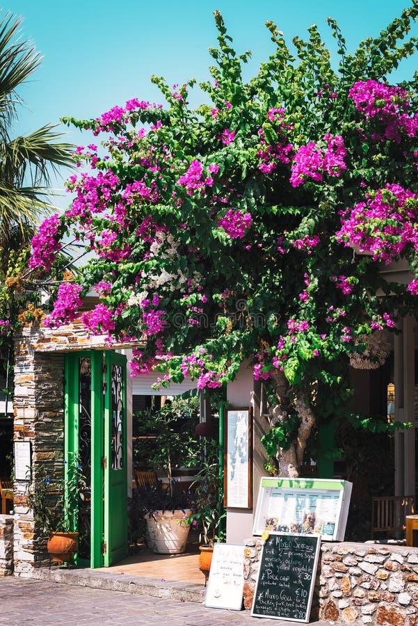 Wejście tradycyjna Grecka tawerna dekorująca z pięknym bougainvillea kwitnie obraz stock