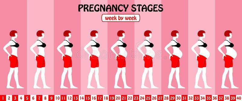 40 weken zwangerschapsstadia van een zwangere vrouw met bustehouder en vector illustratie