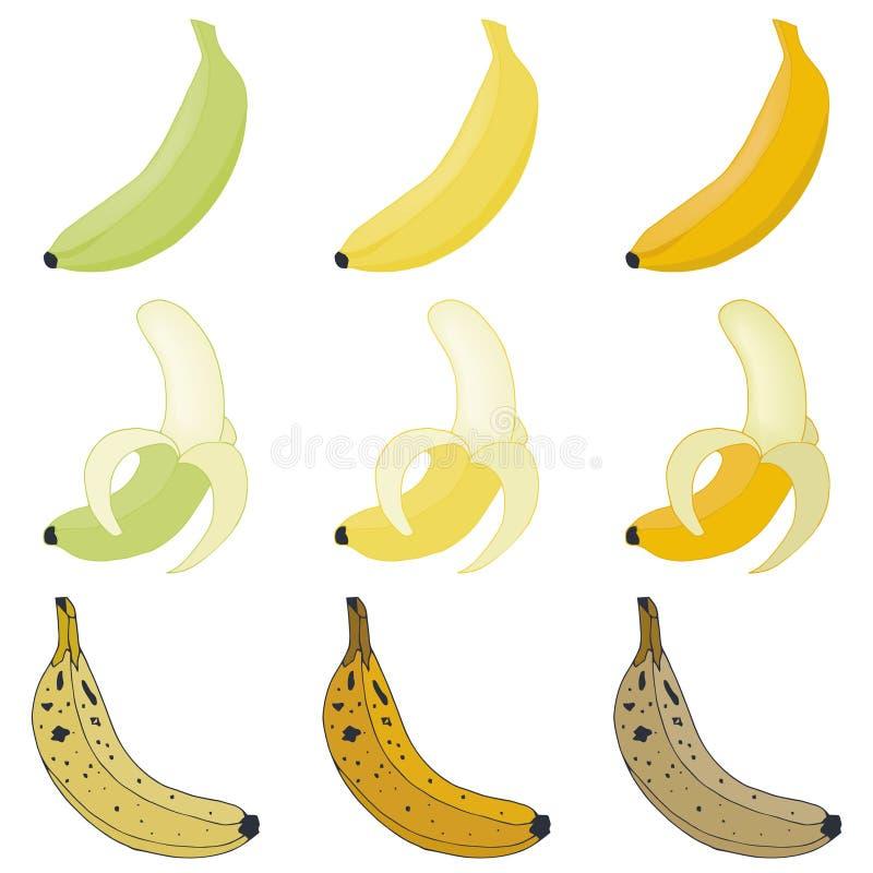 Wektorów ustaleni banany royalty ilustracja