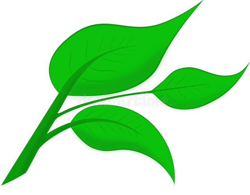 Wektorów zieleń barwiący liście zdjęcia royalty free