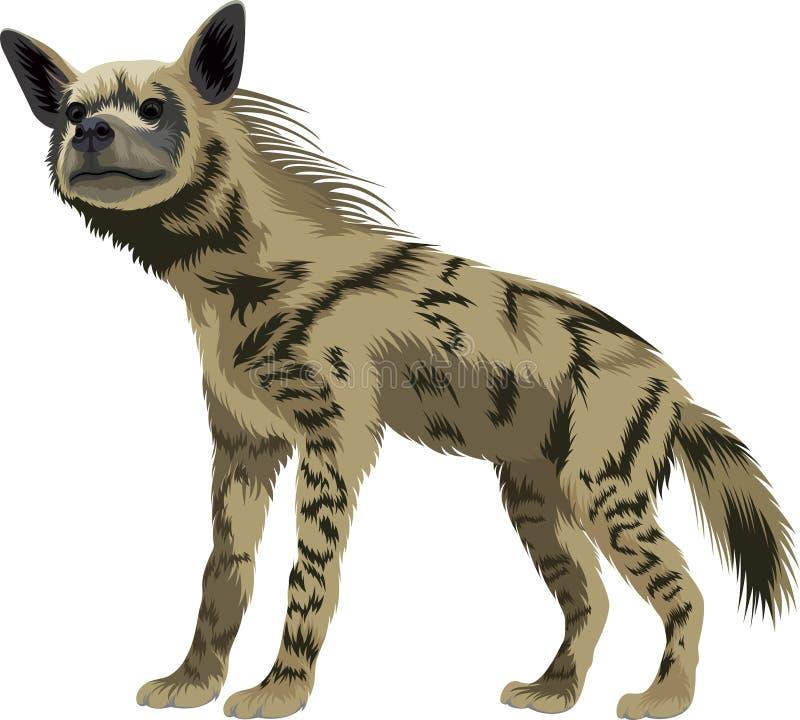 Wektor pasiasta hiena ilustracji
