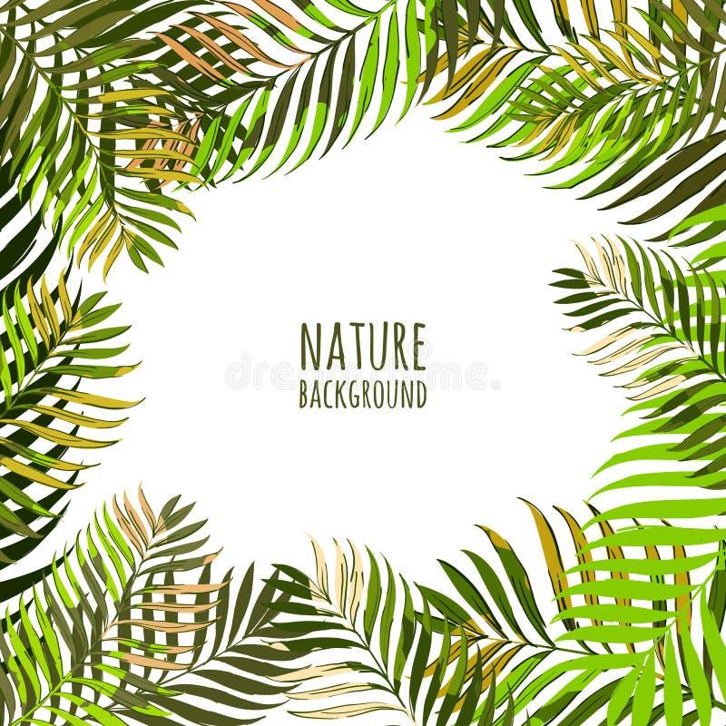 Wektor rama z kokosowej palmy liśćmi Kwiecisty lata tło z tropikalnymi zielonymi liśćmi ilustracja wektor