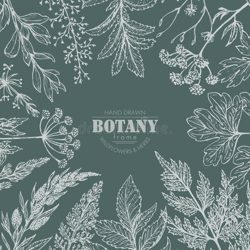 Wektor rama z ręka rysującymi ziele i wildflower elementami royalty ilustracja