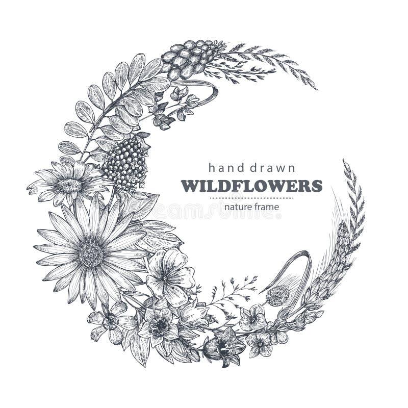 Wektor rama z ziele i wildflower elementami