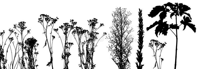 wektor roślin trawy royalty ilustracja