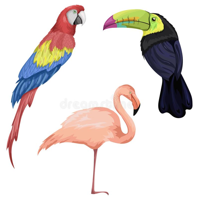Wektor ustalone ilustracje z papugą, flamingiem i pieprzojadem, royalty ilustracja