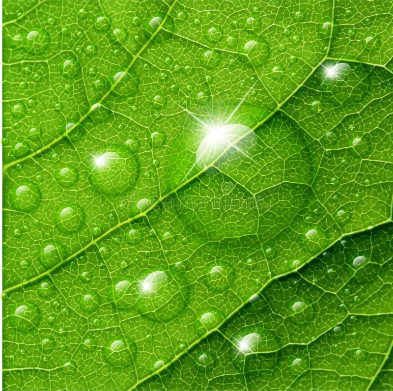 Wektor wody krople na zielonym liściu ilustracja wektor