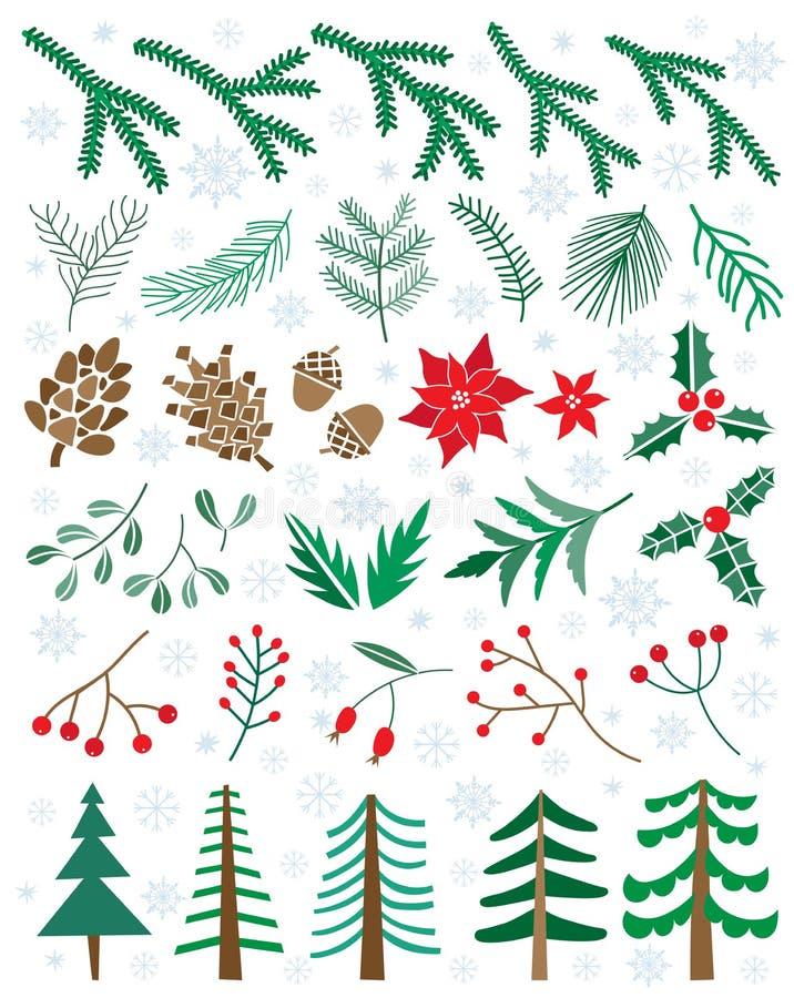 Wektor zimy ustaleni kwiaty, rośliny, jagody, pinecones Bożenarodzeniowa kwiecista ilustracja ilustracji