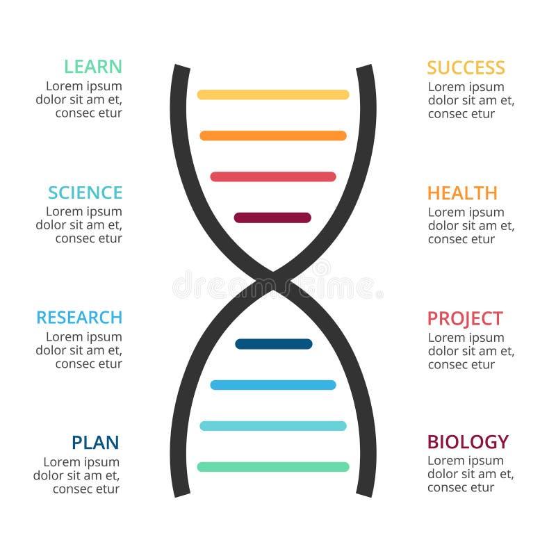 Wektorowa DNA nauka infographic, medyczny diagram, opieka zdrowotna wykres, szpitalna prezentacja, mapa Pojęcie z 8 opcjami ilustracja wektor