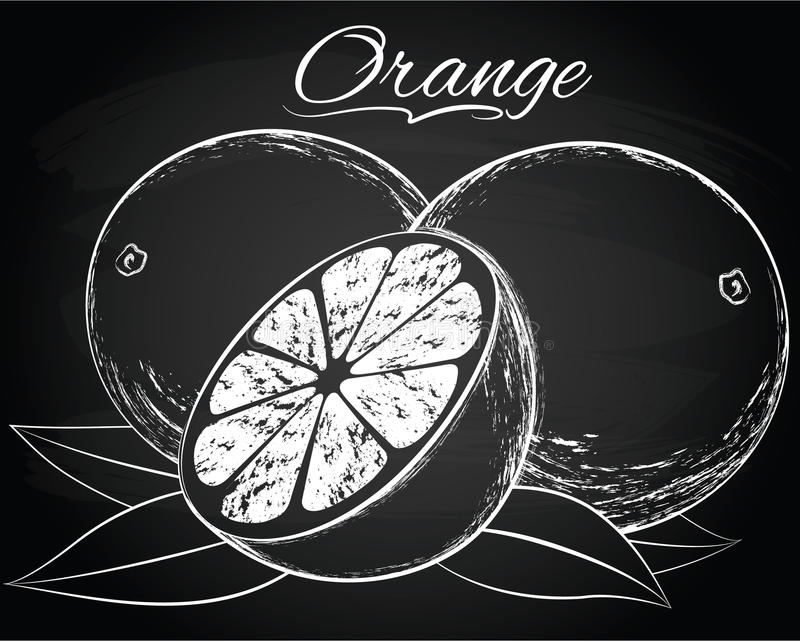 Wektorowa dojrzała pomarańcze royalty ilustracja