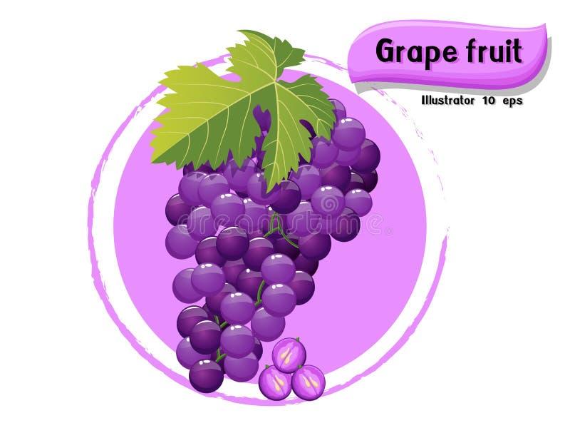 Wektorowa Gronowa owoc odizolowywająca na koloru tle, ilustrator 10 eps royalty ilustracja
