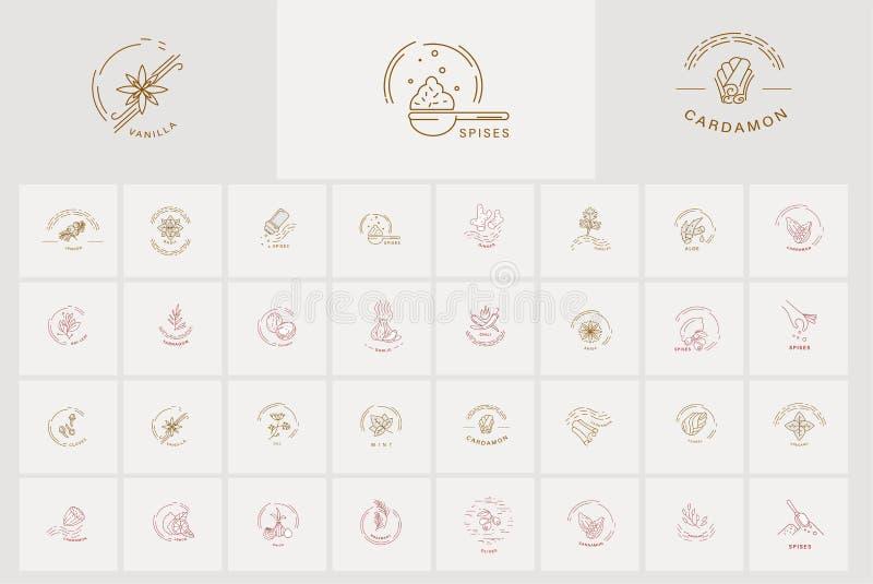 Wektorowa ikona i logo dla pikantność i ziele Editable konturu uderzenia rozmiar Kreskowy mieszkanie konturu, cienkiego i liniowe ilustracja wektor