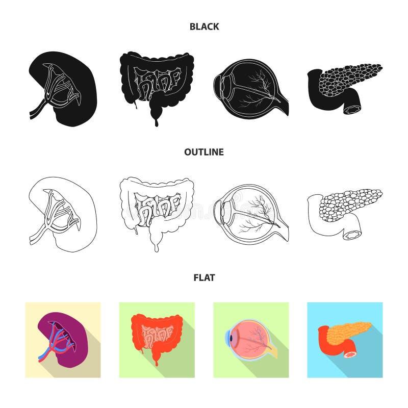Wektorowa ilustracja ciała i istoty ludzkiej ikona Kolekcja ciało i medyczna akcyjna wektorowa ilustracja royalty ilustracja