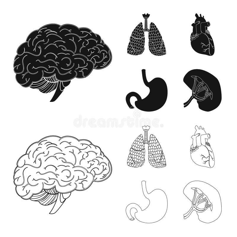 Wektorowa ilustracja ciała i istoty ludzkiej ikona Kolekcja ciało i medyczny akcyjny symbol dla sieci ilustracji