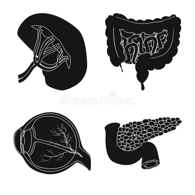 Wektorowa ilustracja ciała i istoty ludzkiej ikona Kolekcja ciało i medyczny akcyjny symbol dla sieci royalty ilustracja