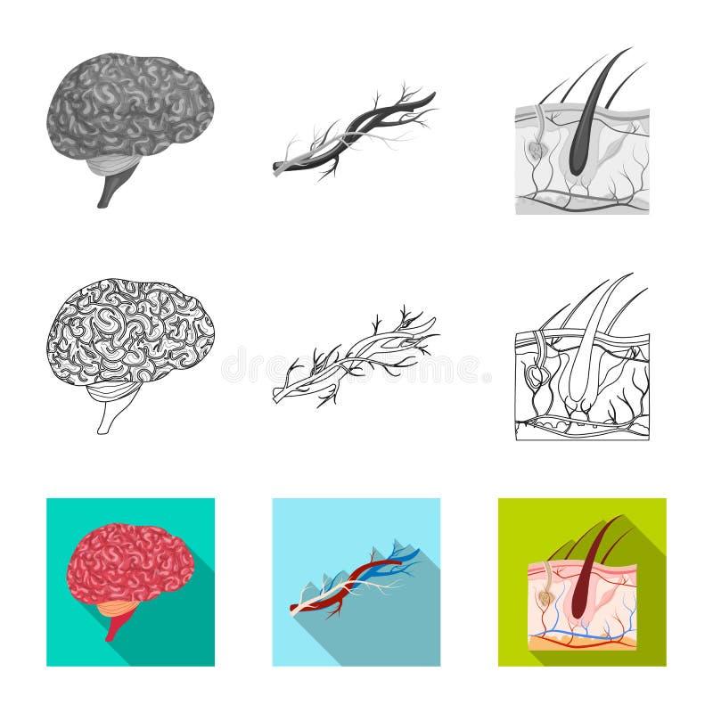 Wektorowa ilustracja ciała i istoty ludzkiej ikona Set ciało i medyczna akcyjna wektorowa ilustracja ilustracji