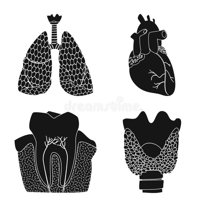 Wektorowa ilustracja ciała i istoty ludzkiej ikona Set ciało i medyczna wektorowa ikona dla zapasu royalty ilustracja