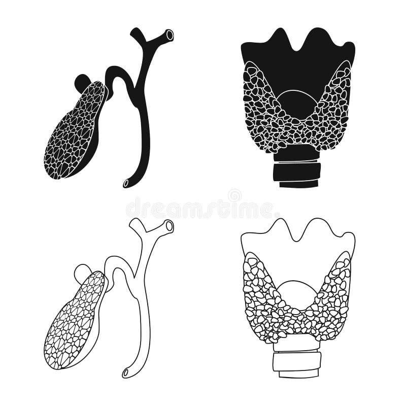 Wektorowa ilustracja ciała i istoty ludzkiej logo Kolekcja ciało i medyczna wektorowa ikona dla zapasu ilustracja wektor