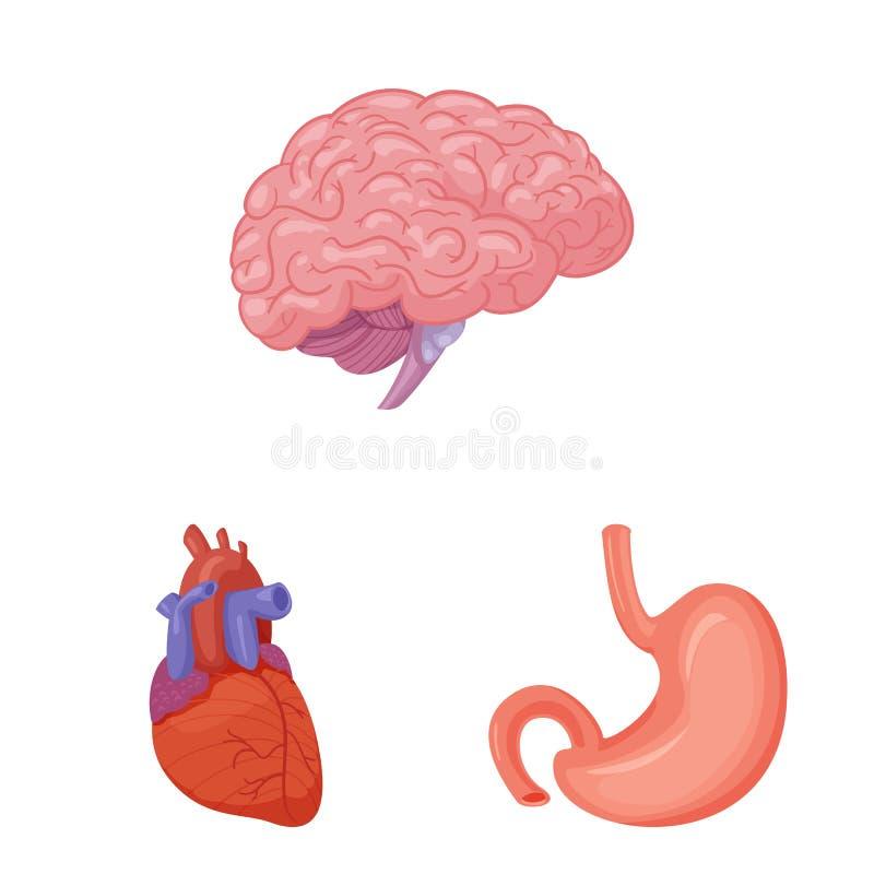 Wektorowa ilustracja ciała i istoty ludzkiej symbol Kolekcja ciało i medyczny akcyjny symbol dla sieci ilustracji