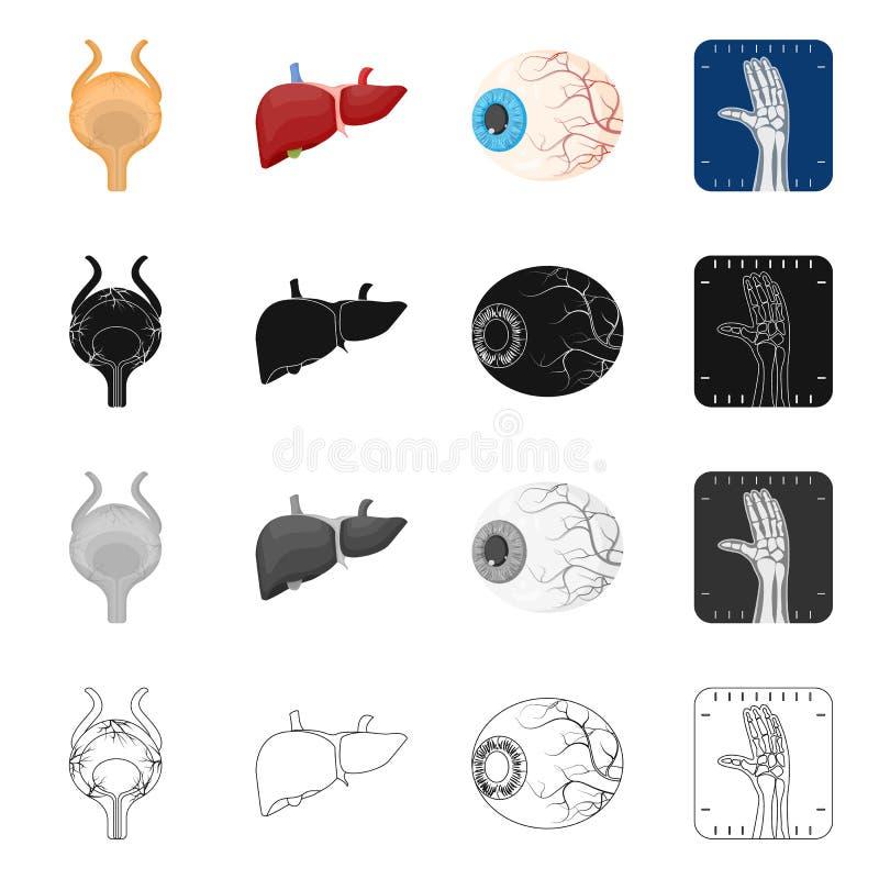 Wektorowa ilustracja ciała i istoty ludzkiej symbol Kolekcja ciało i medyczny akcyjny symbol dla sieci royalty ilustracja