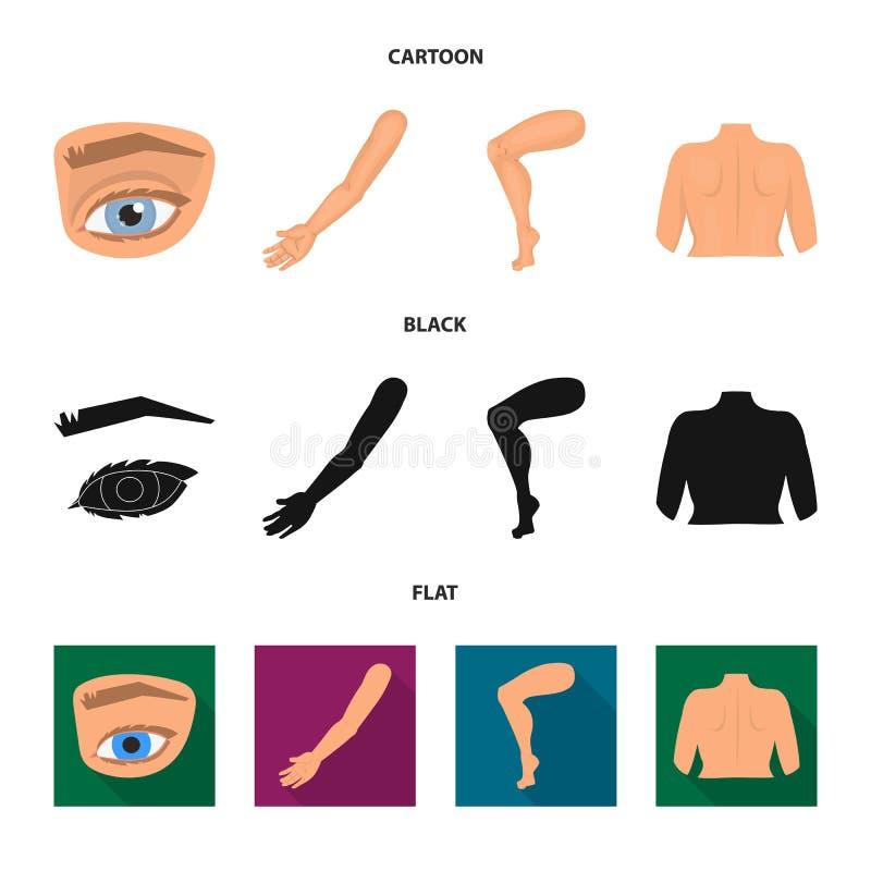 Wektorowa ilustracja cia?a i cz??ci ikona Kolekcja cia?a i anatomii akcyjny symbol dla sieci royalty ilustracja