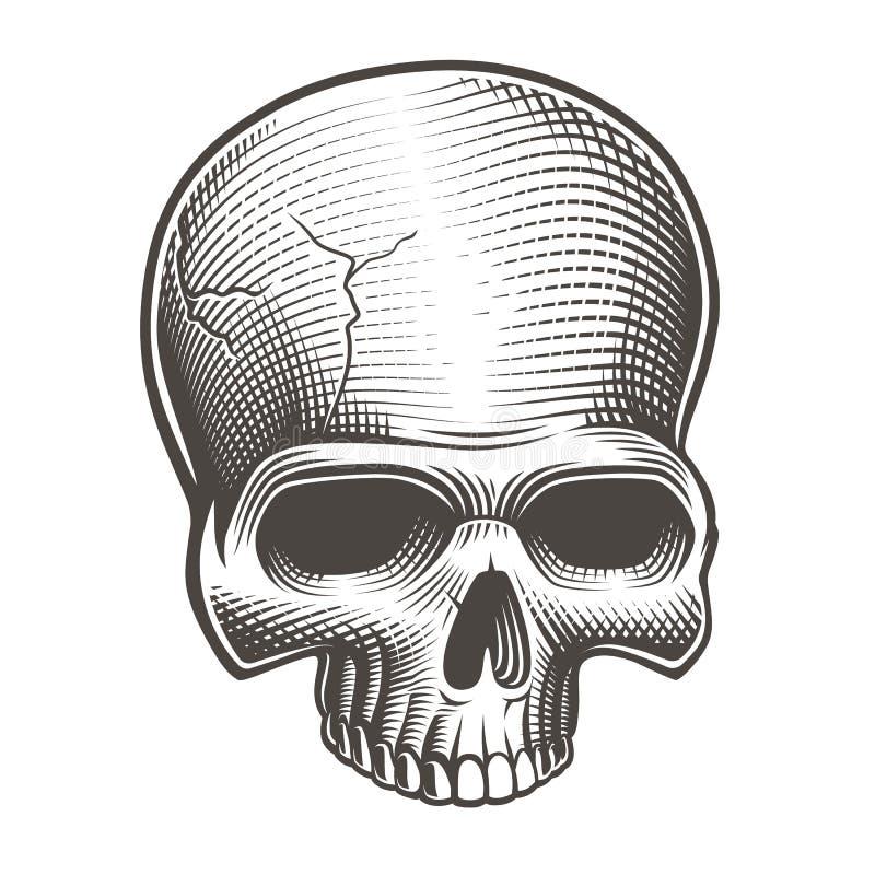 Wektorowa ilustracja część czaszka ilustracja wektor