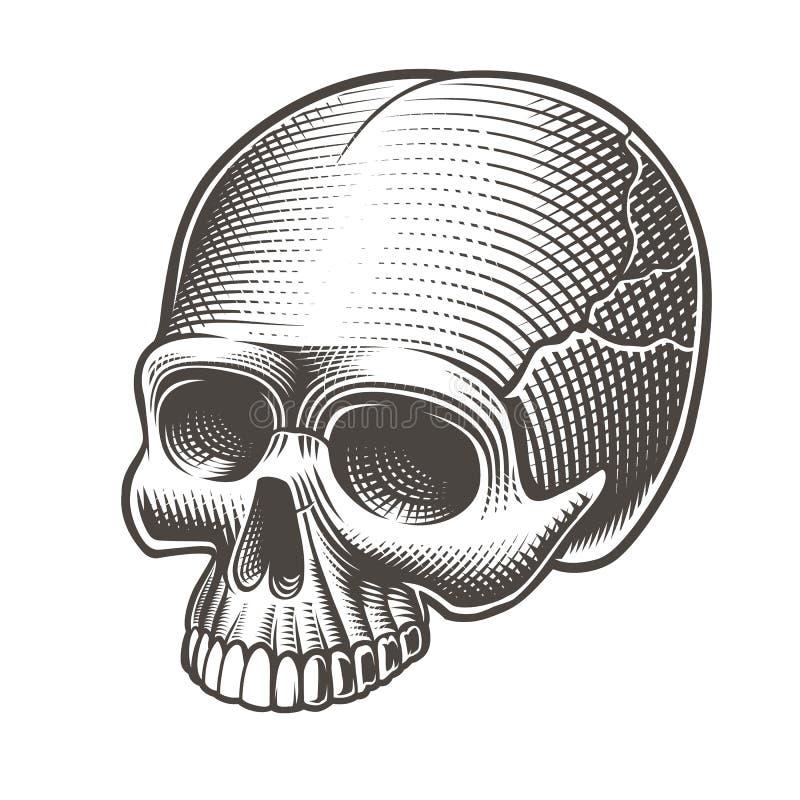 Wektorowa ilustracja czaszka bez niskiej szczęki ilustracja wektor