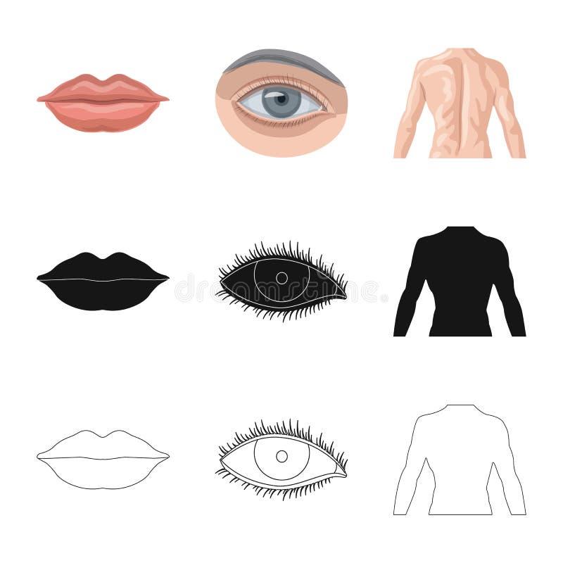 Wektorowa ilustracja istoty ludzkiej i części znak Set istoty ludzkiej i kobiety akcyjny symbol dla sieci royalty ilustracja