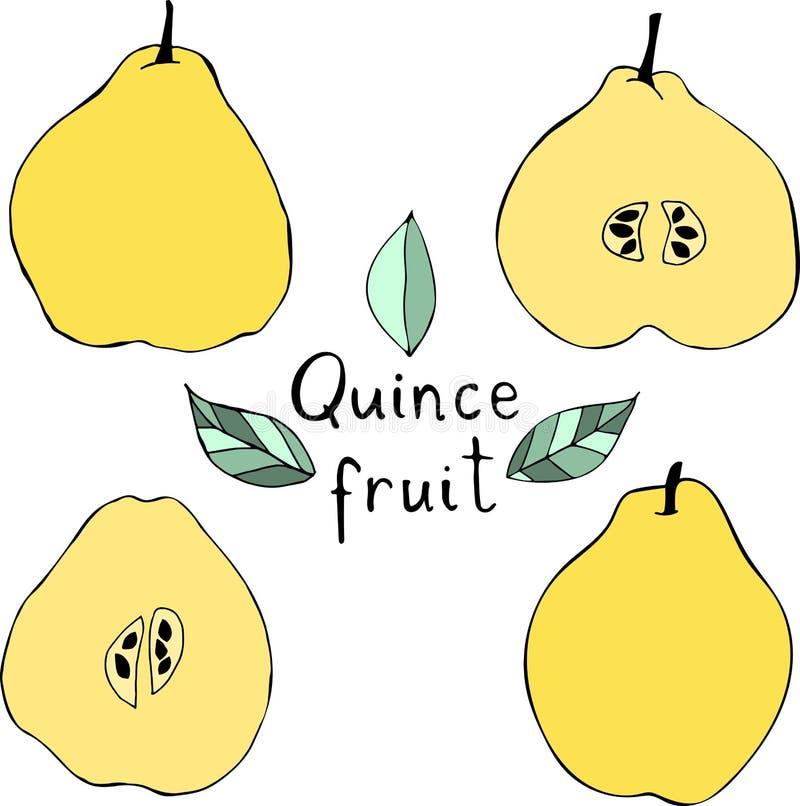 Wektorowa ilustracja jabłczana pigwa Ręki rysować tropikalne owoc royalty ilustracja