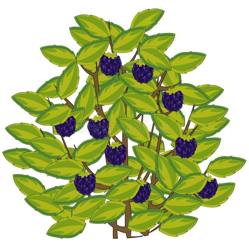 Wektorowa ilustracja jagodowa czernica na krzaku ilustracja wektor