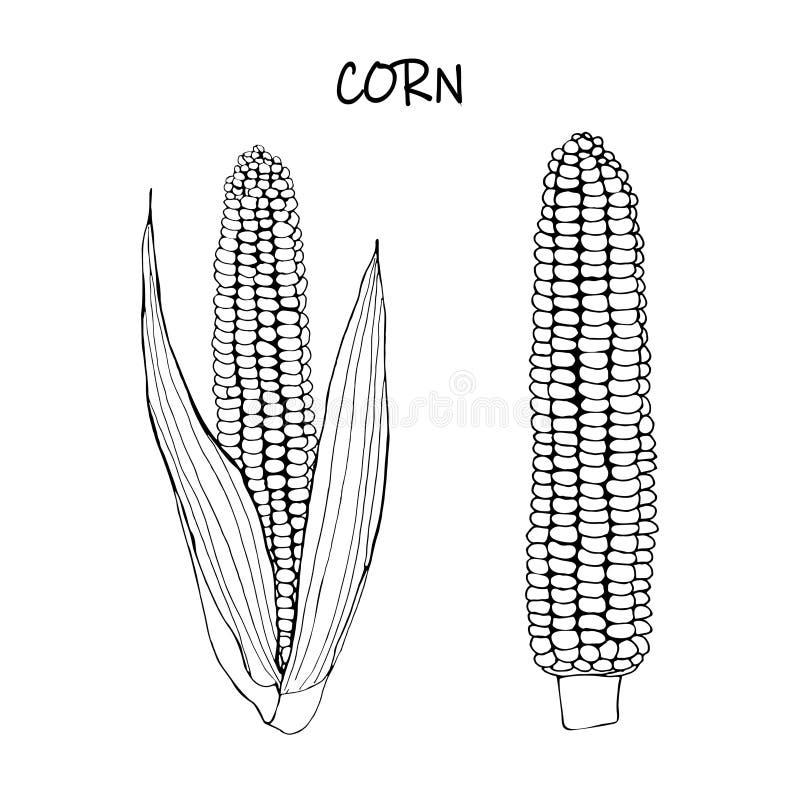 Wektorowa ilustracja kukurudza - czarny konturu doodle ilustracji