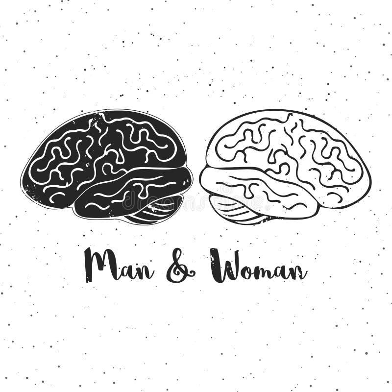 Wektorowa ilustracja mężczyzna i kobiety mózg Te są ikonowi przedstawicielstwa rodzaj psychologia, twórczość, pomysły ilustracja wektor