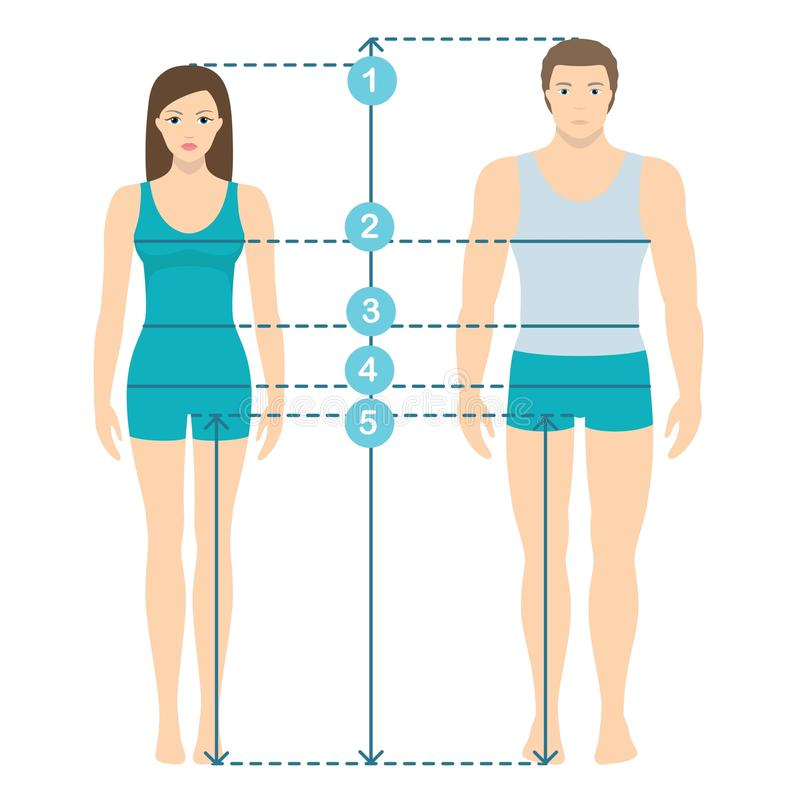 Wektorowa ilustracja mężczyzna i kobiety w pełnej długości z pomiar liniami ciało parametry Mężczyzna i kobiet rozmiarów pomiary royalty ilustracja