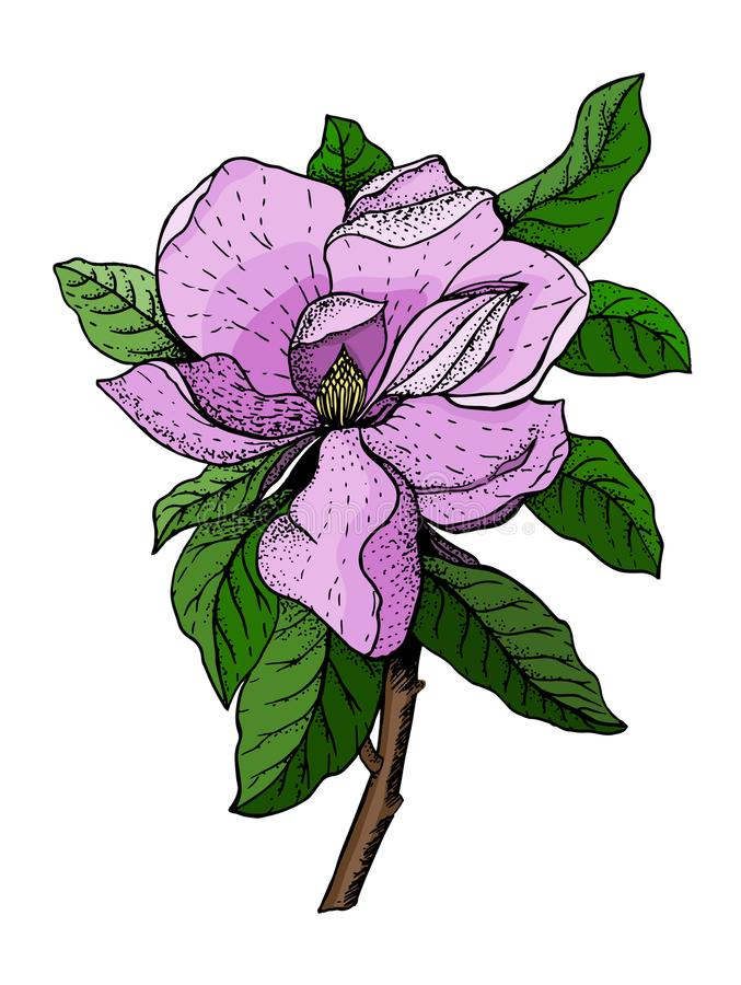 Wektorowa ilustracja menchia kwiaty i zieleni liście magnolia ilustracji