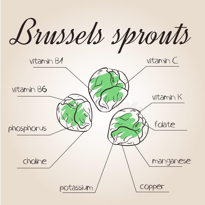 Wektorowa ilustracja odżywki spisuje dla Brussels flanc ilustracji